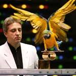 Шоу попугаев - Официальный сайт агента