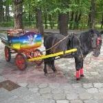 Прокат карет и животных - Официальный сайт агента